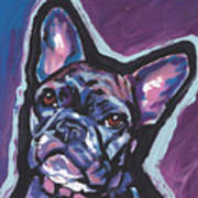 Bouledogue Baby Poster