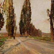 Boulevard Of Poplars Near Plankenberg Poster