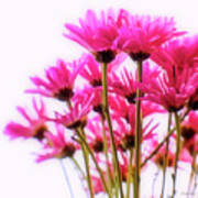 Bouquet Of Chrysanthemums Poster