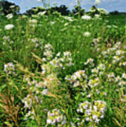 Bouquet Of Wildflowers Along Country Road In Mchenry County Poster