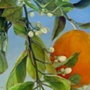 Boutons d Oranges Poster