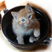 Bowlful Of Kitten Poster