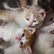 Box Full Of Kittens Poster by Garry Gay