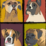 Boxer Dog Portraits Poster