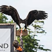 Boy Feeds Mr. Bald Eagle Poster