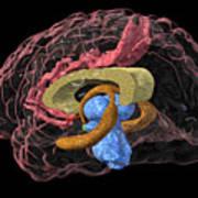 Brain Limbic System, 3-d Mri Scan Poster by Arthur Togaucla