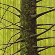 Branch Monster Poster