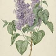 Branch With Purple Lilacs, Maria Geertruyd Barbiers-snabilie, 1786 - 1838 Poster