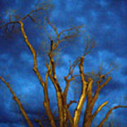 Branches Against Night Sky H Poster