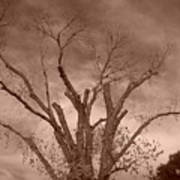 Branches Against Sepia Sky H   Poster