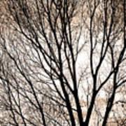 Branches Silhouettes Mono Tone Poster