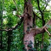 Branching Tree Poster