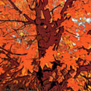 Brandywine  Maple Fall Colors 2 Poster