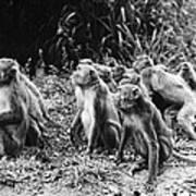 Brazil: Monkeys Poster