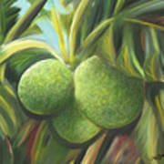 Breadfruits St Kitts Poster