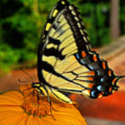 Breakfast At The Gardens - Swallowtail Butterfly 005 Poster