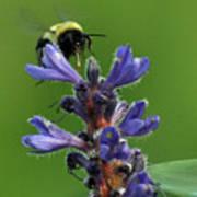 Bumble Bee Breakfast Poster