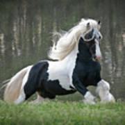 Breathtaking Stallion Poster