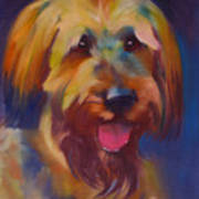 Briard Puppy Poster