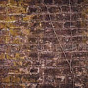 Vine Up A Brick Wall  Poster