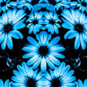 Bright Blue Daisies Poster