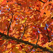 Bright Colorful Autumn Tree Leaves Art Prints Baslee Troutman Poster