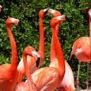 Bright Flamingos Poster