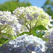Bright Floral Art Pastel Blue Purple Hydrangeas Flowers Baslee Troutman Poster