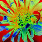 Bright Flower Poster