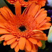 Bright Orange Daisy Poster