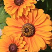 Bright Orange Flowers  Poster