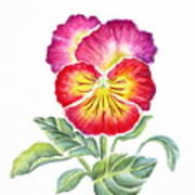 Bright Pansy Poster