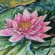 Bright Pink Waterlily Poster