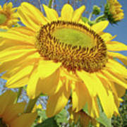 Bright Sunny Happy Yellow Sunflower 10 Sun Flowers Art Prints Baslee Troutman Poster