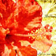 Brilliant Hibiscus Poster