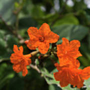 Brilliant Orange Tropical Flower Poster