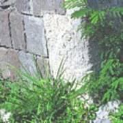 Brimstone Wall Poster