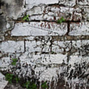 Broken Stucco Wall With Whitewashed Exposed Brick Texture And Ve Poster