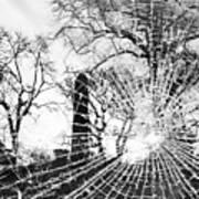 Broken Trees Poster