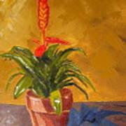 Bromeliad Vriesea Poster