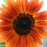 Bronze Sunflower No 2 Poster