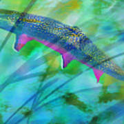 Brook Trout In The Stream Poster by Terril Heilman