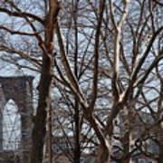 Brooklyn Bridge Thru The Trees Poster