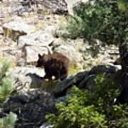 Brown Bear Poster
