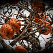 Brown Fruit Abstract Poster
