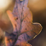 Brown Leaf Poster
