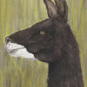 Brown Llama Profile Cathy Peek Farm Animal Art Poster