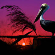 Brown Pelican At Sunset - Painted Poster