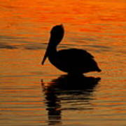 Brown Pelican At Sunset Poster