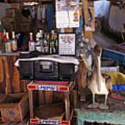 Brown Pelican Visiting Mexican Beach Bar Poster
